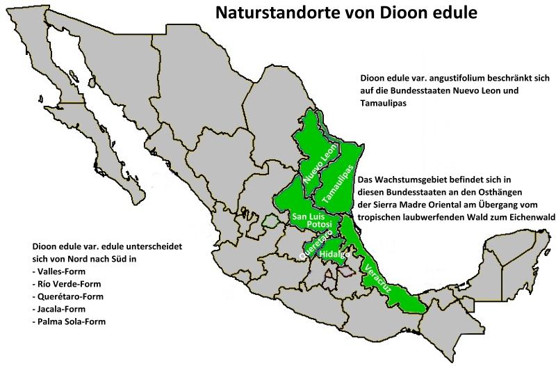 Naturstandorte Dioon edule