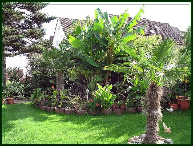 Mit Ser Homepage Möchten Wir Unsere Besucher Am Hobby Exotische Pflanzen Im Garten Vielen Fotos Und Einigen Informationen Rund Um